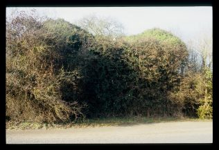 Hidden behind the trees in 2011 | David Hill
